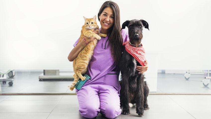 medicina veterinária preventiva